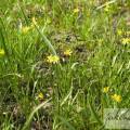 trawa i kwiaty