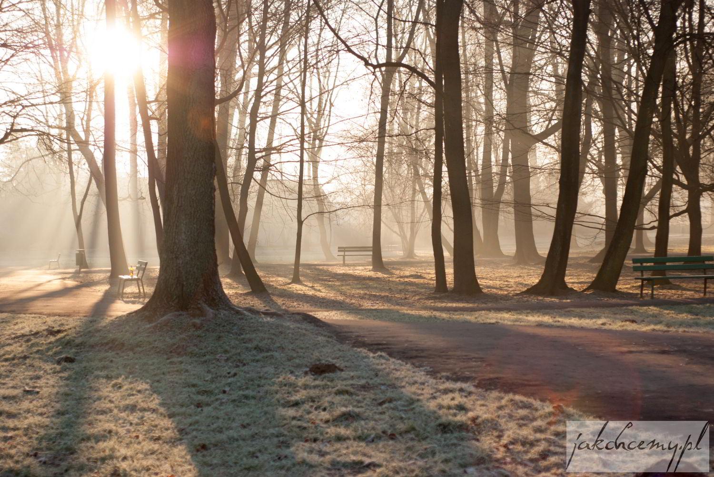 Wschód Słońca w parku