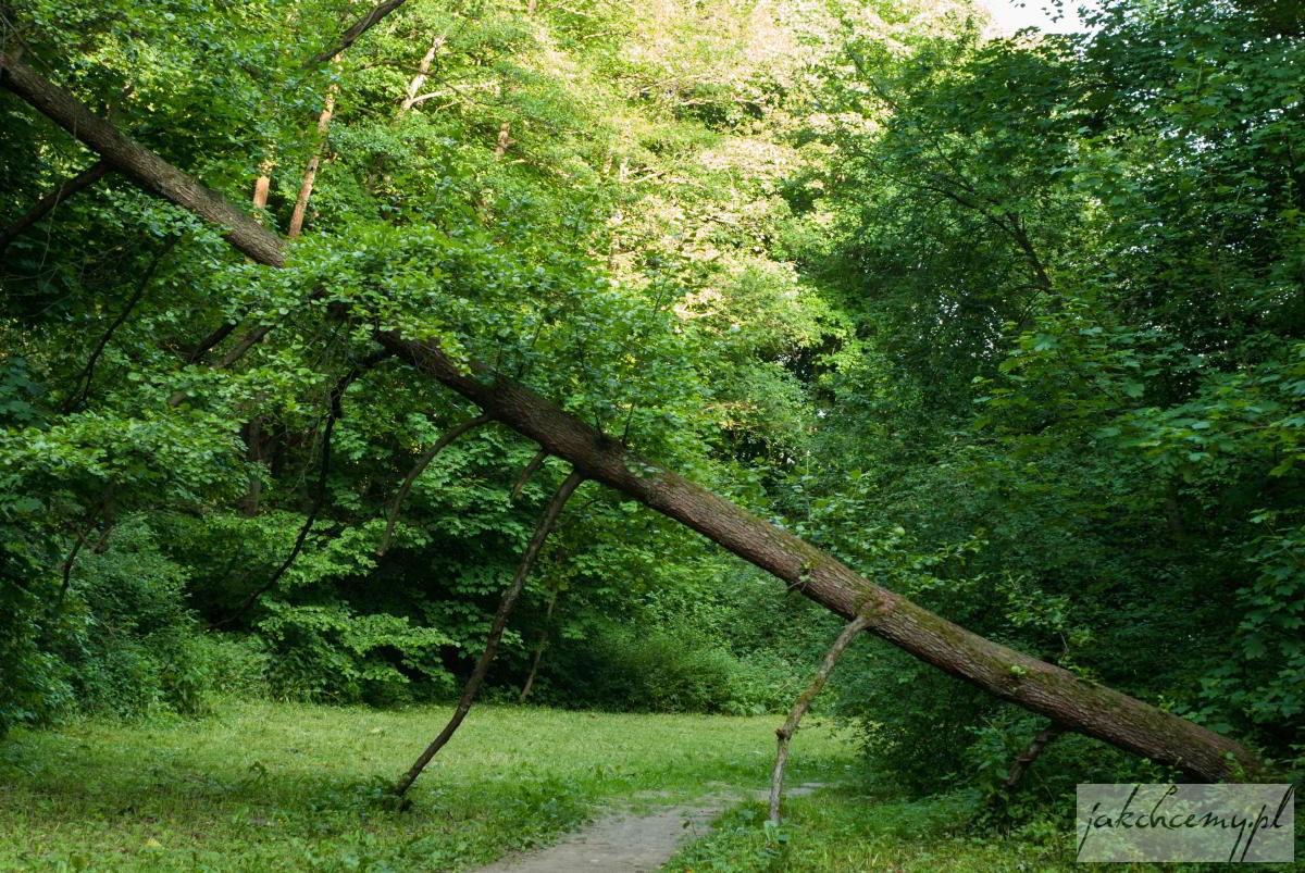 Dolina Mnikowska drzewo nad ścieżką