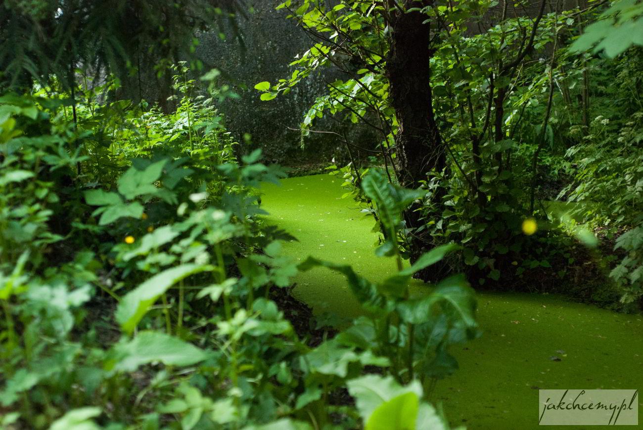 Dolina Mnikowska zielona woda