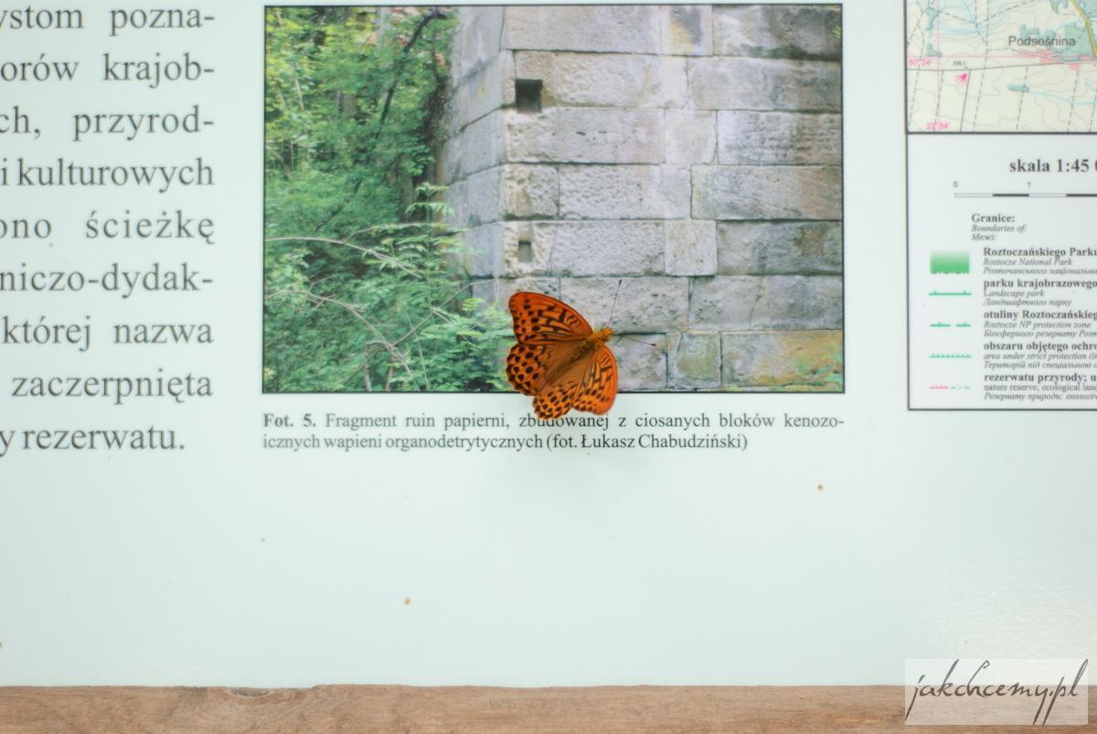 Czartowe Pole Motylek