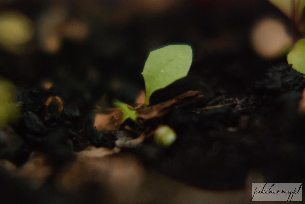 roślinka mała