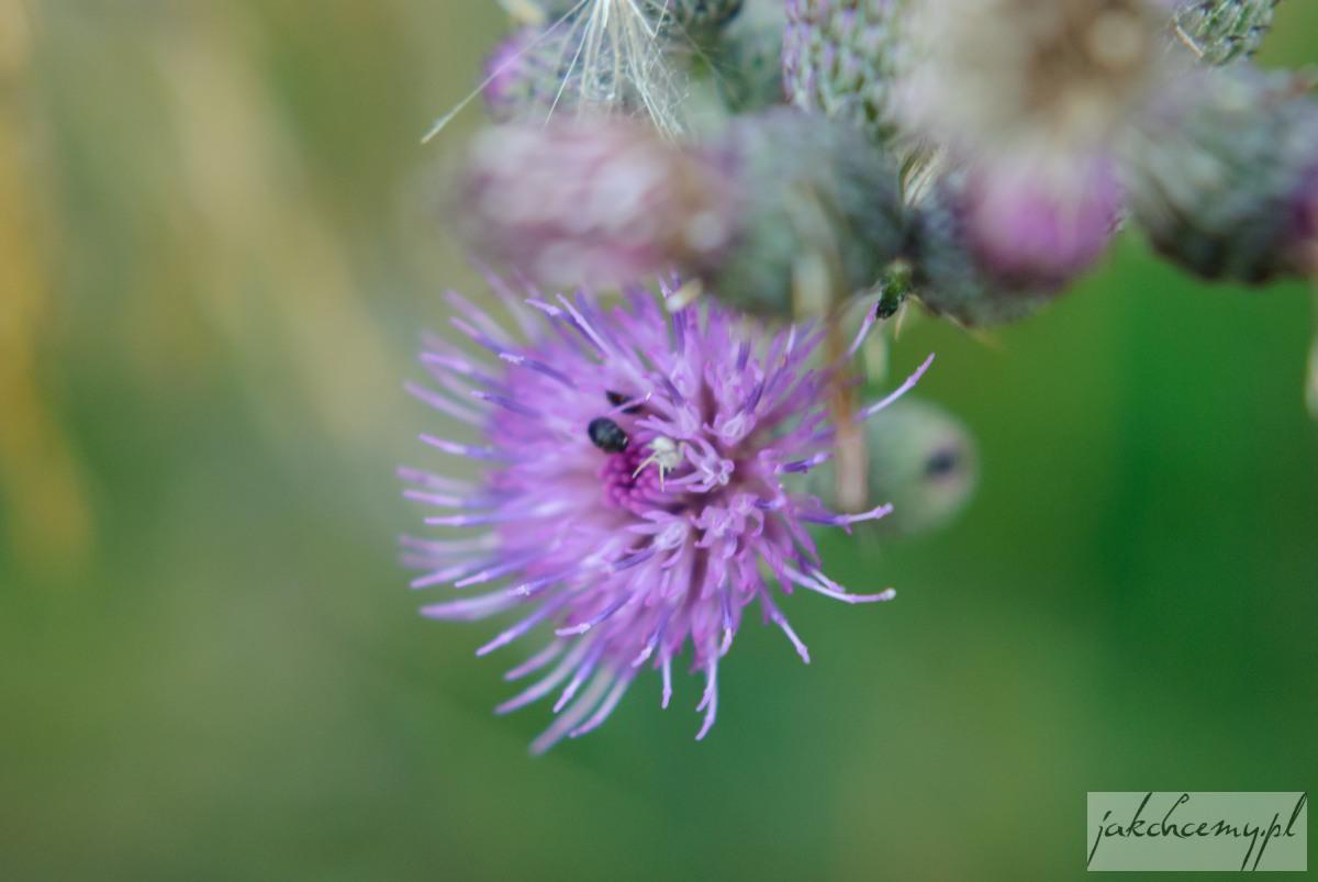 Kwiatek z robaczkiem