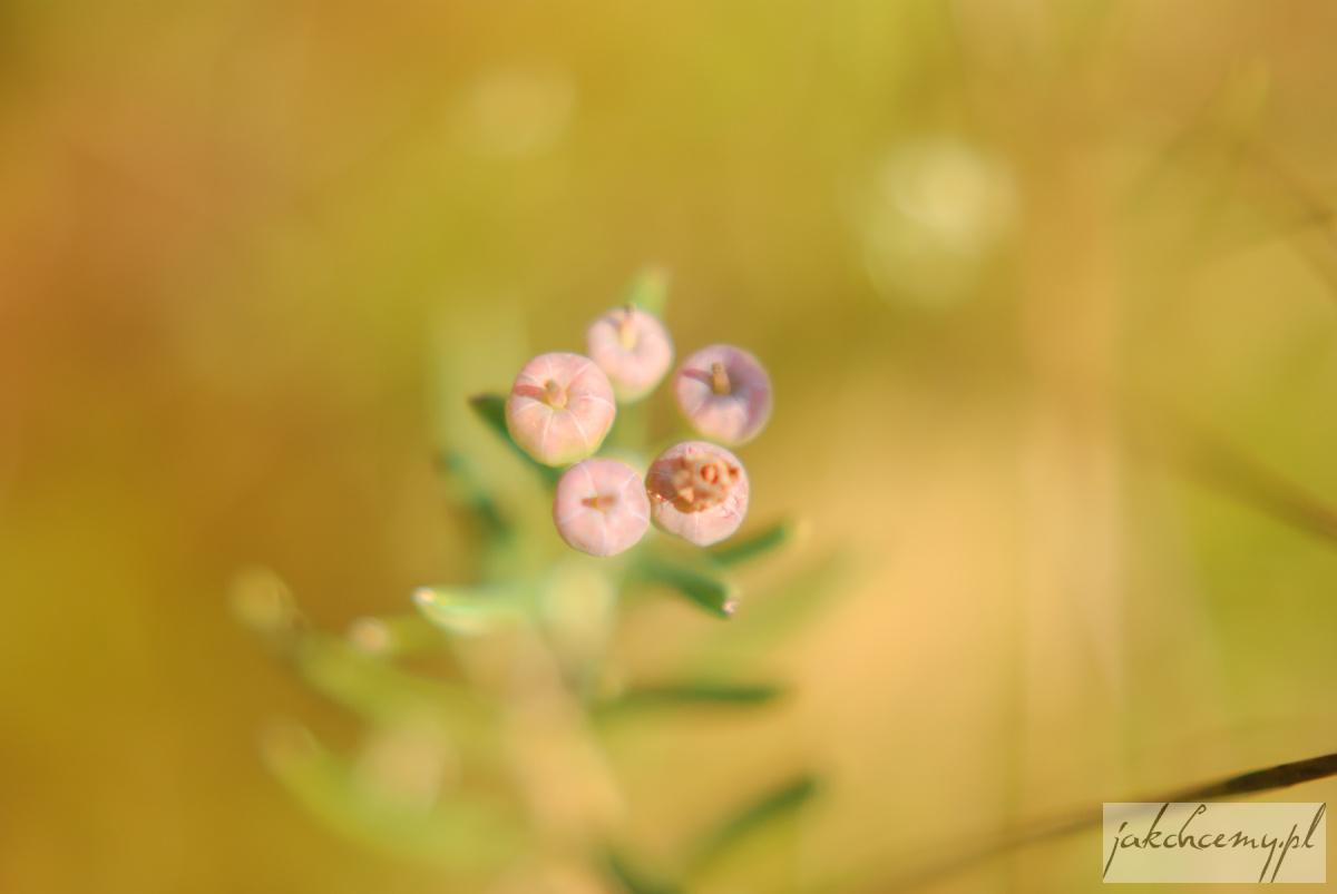 Obary roślinki owoce jasne