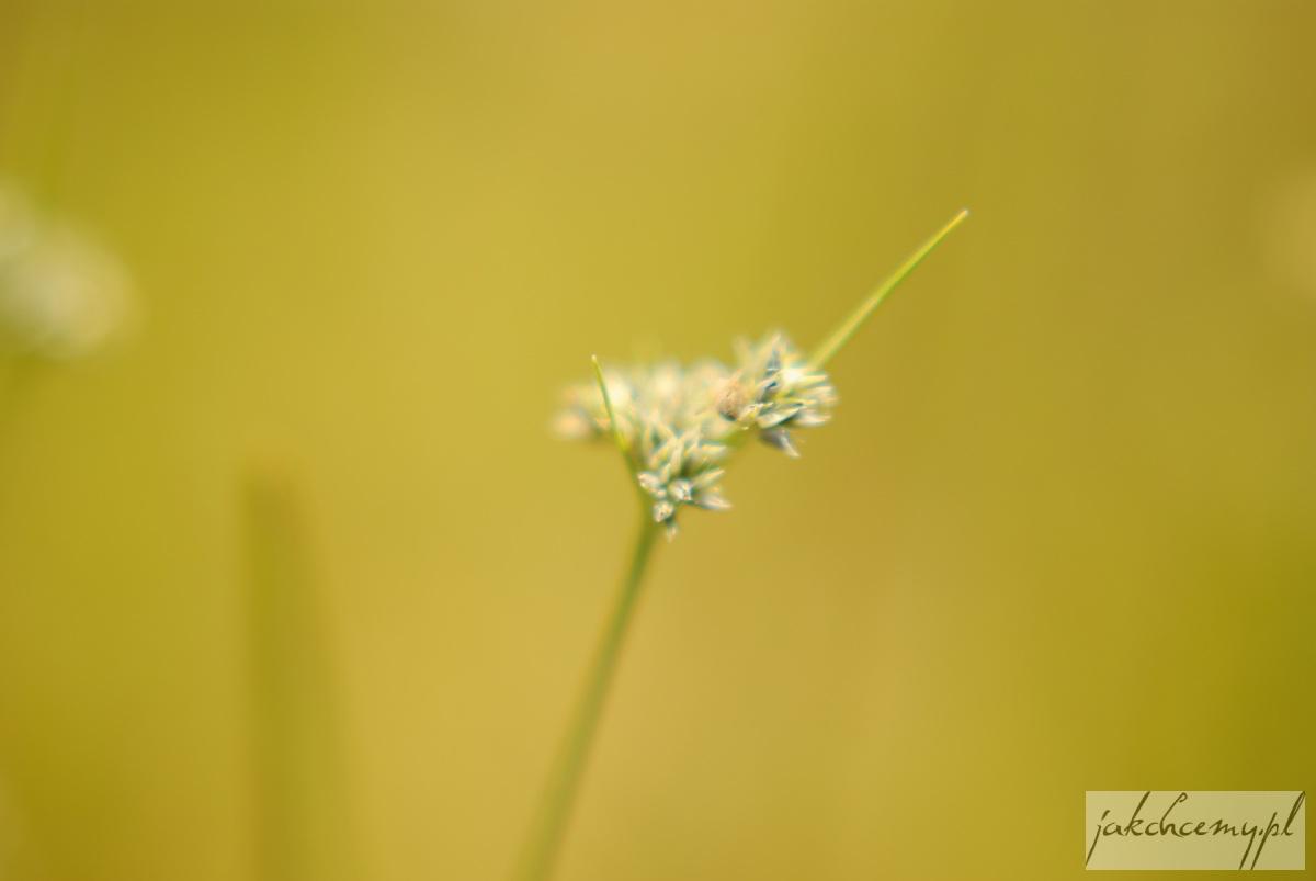 Obary roślinka