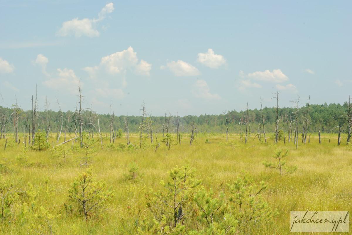 Obary widok obumarłe drzewa