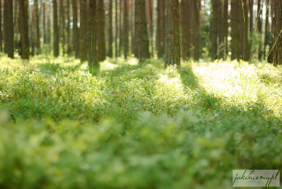Rezerwat Obary runo lesne