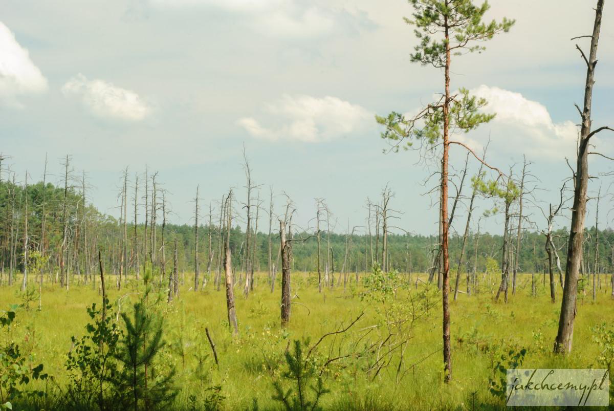Rezerwat Obary torfowisko
