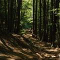 Leśna droga bieszczadzka