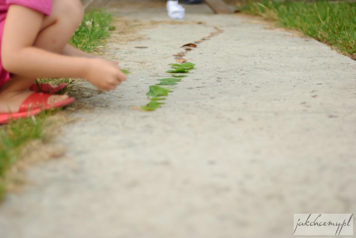 Ścieżka z liści i kory
