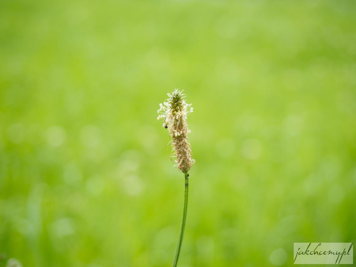 roślinka