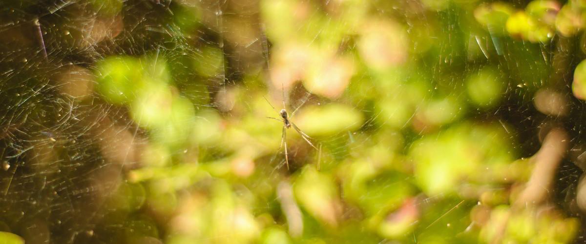pająk z Roztocza