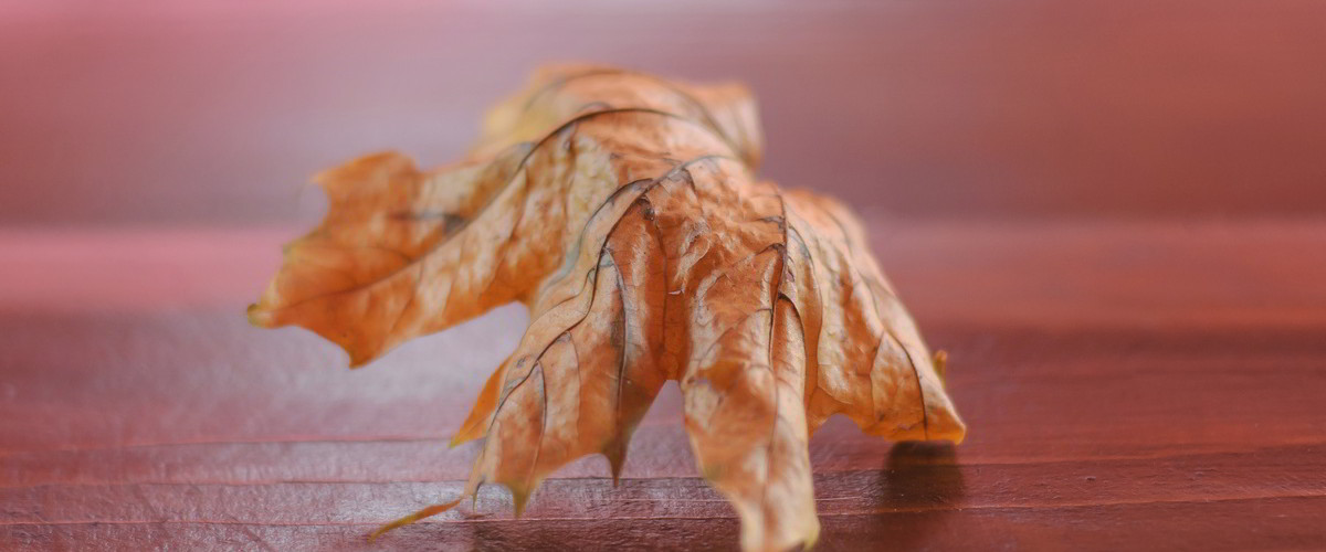 Jesienny listek