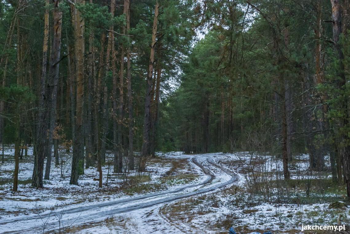 Topniejący śnieg w lesie