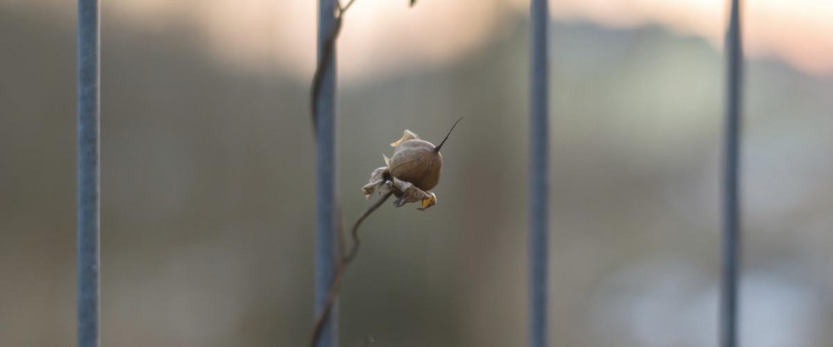 Klatka pręty ogrodzenia roślinka
