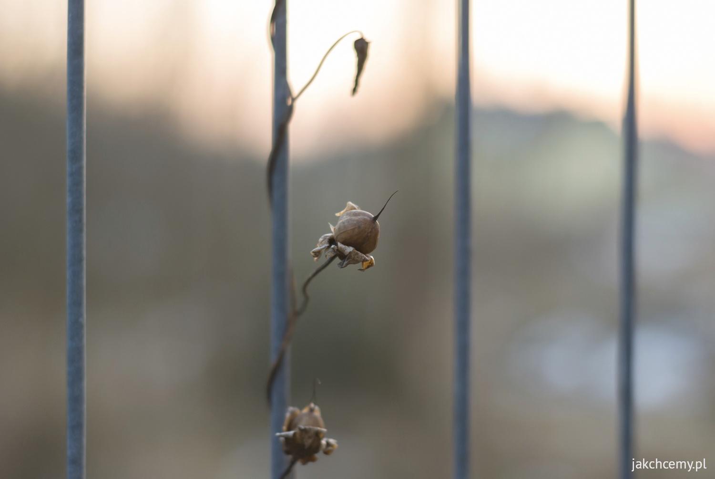 Klatka ogrodzenia roślinka