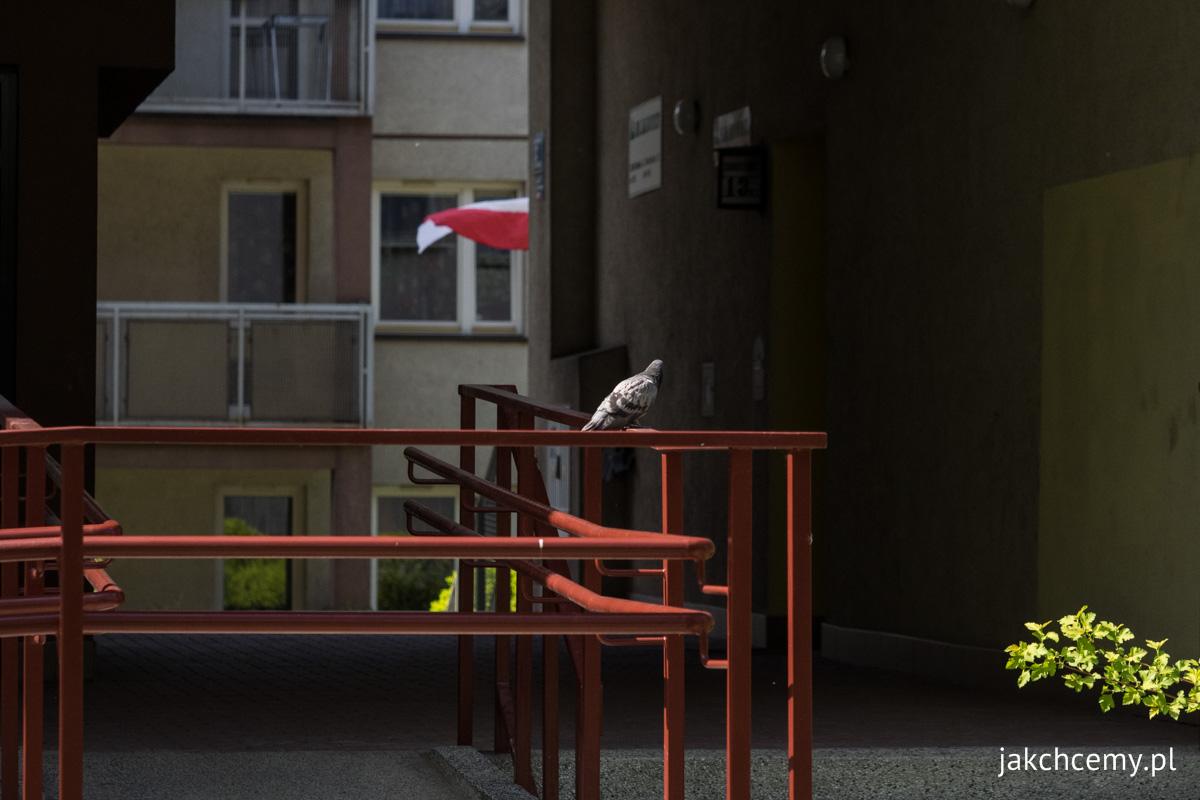 Spacerowa majówka z23 gołąb i flaga