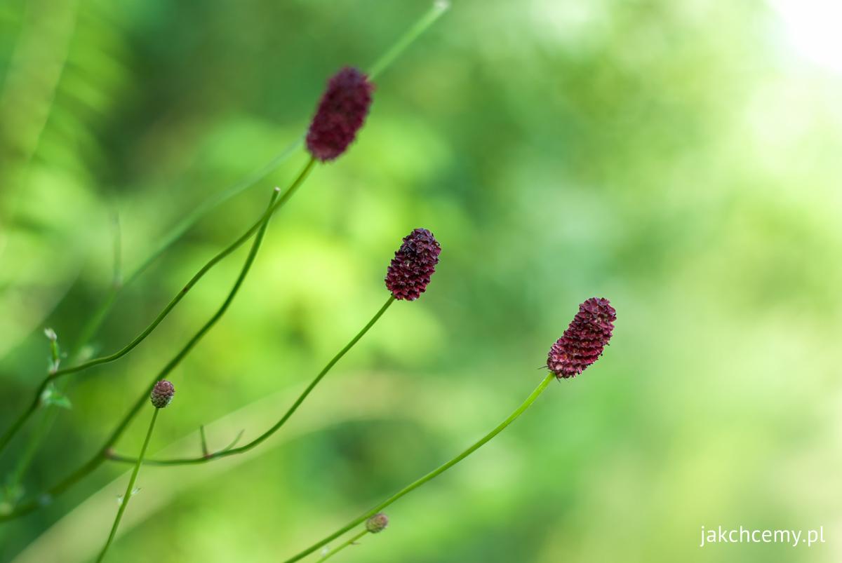 Roślinki