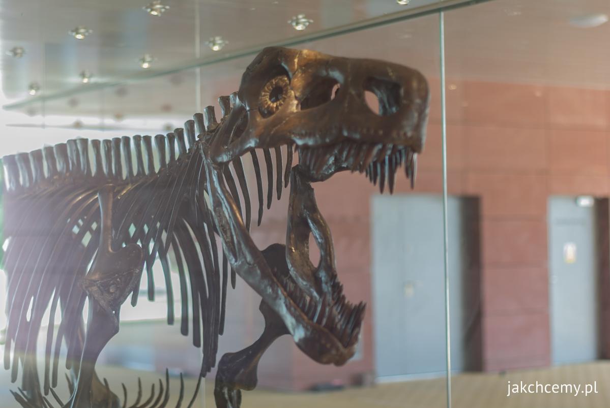 Smok wawelski szkielet