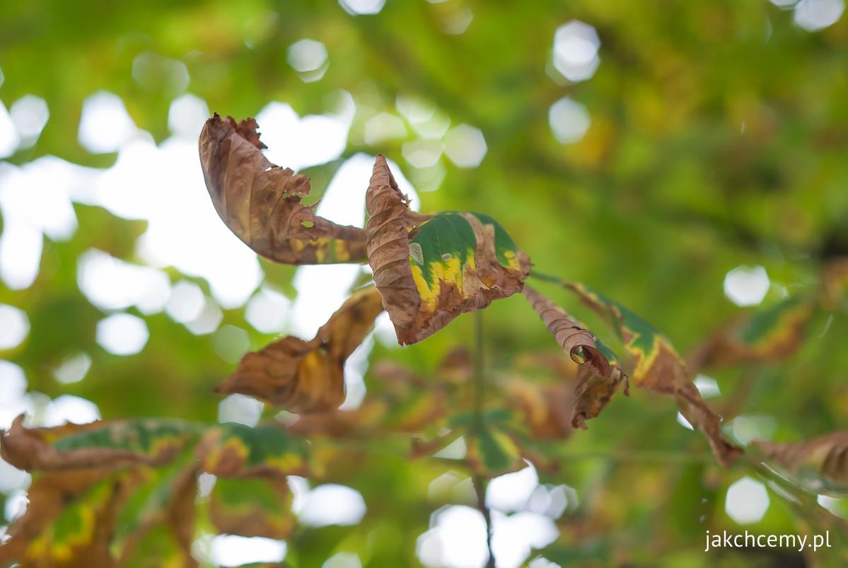 Jesienny spacer