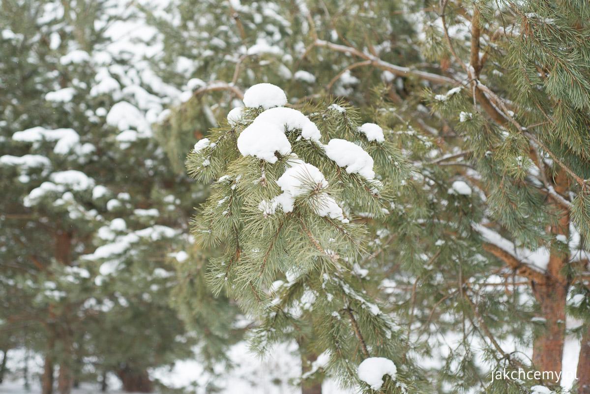 zimowe ferie part1 8