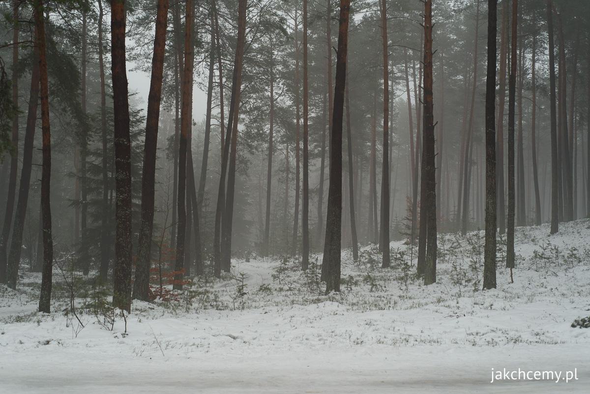 las i śnieg, ferie, drugi tydzień 2