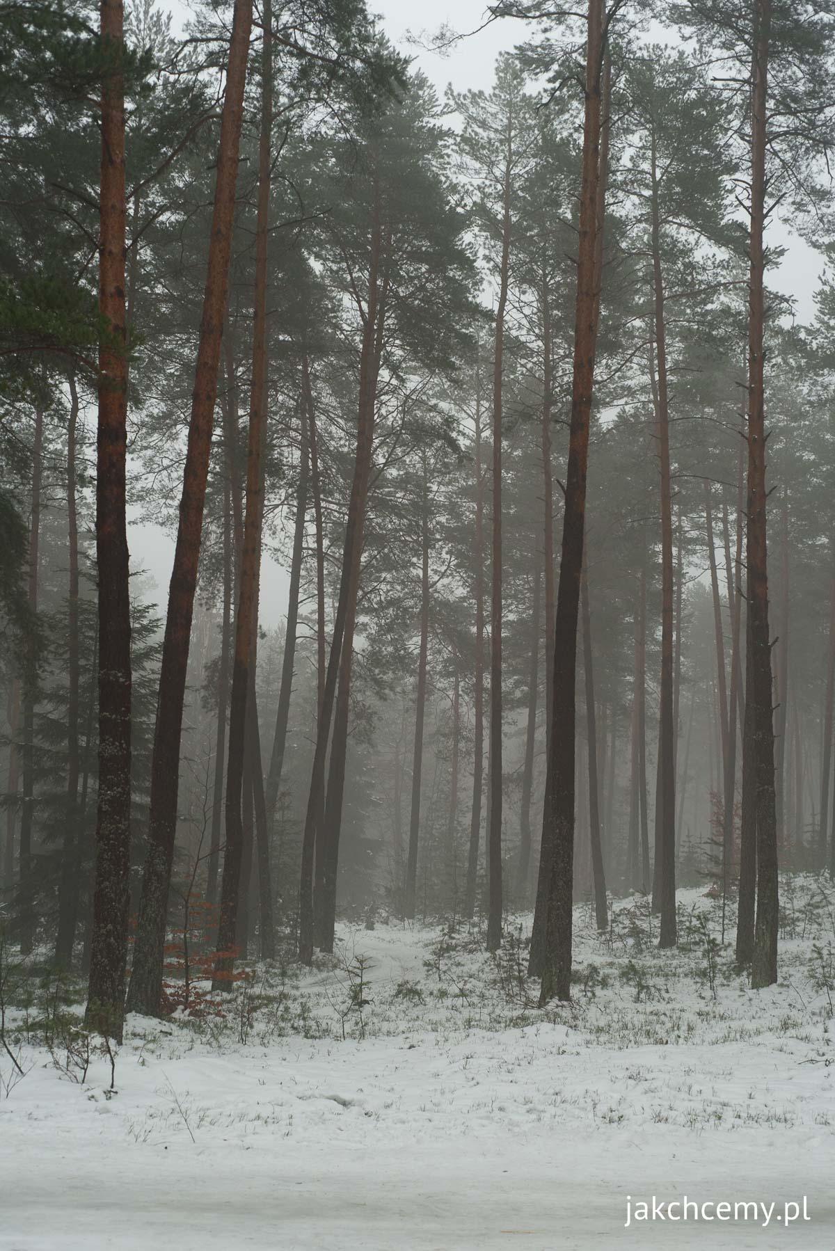 las, śnieg, ferie 3