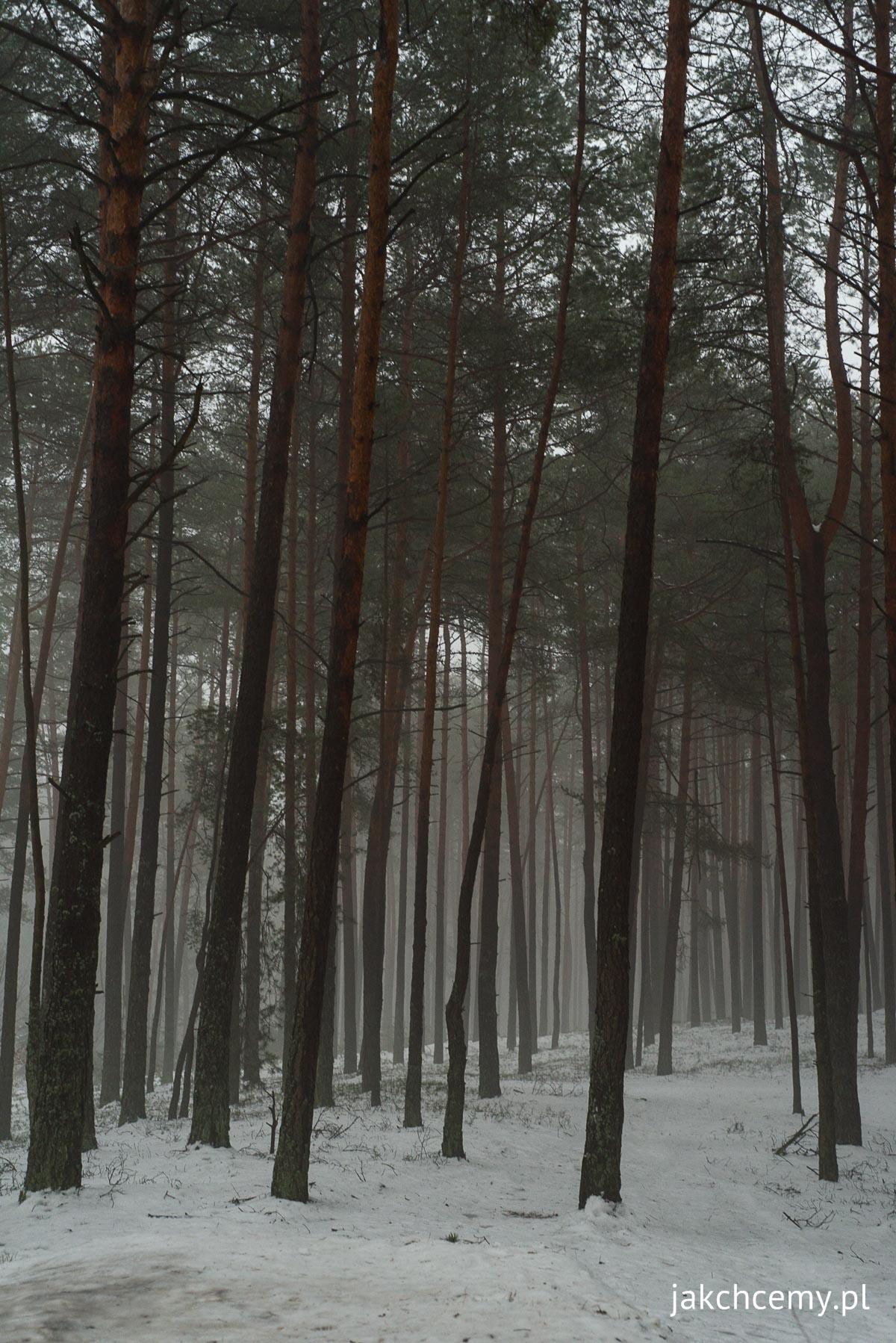 las, śnieg, ferie 9