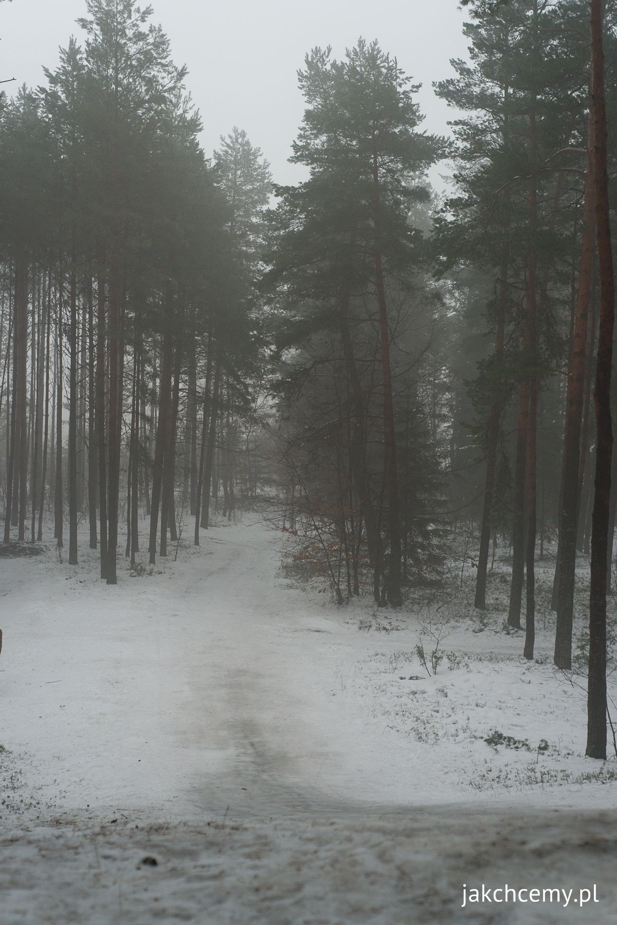 ferie, śnieg, las 10