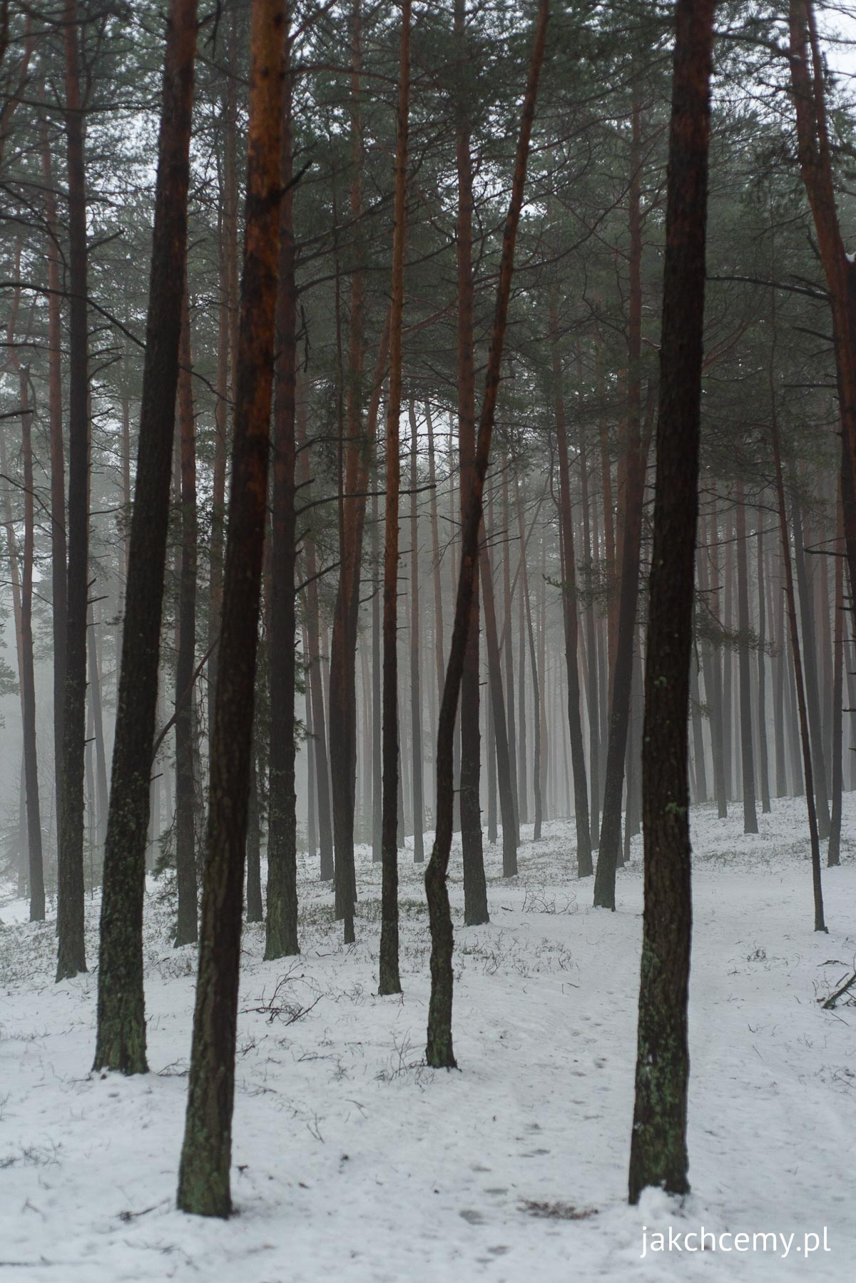 Las, śnieg, ferie 11