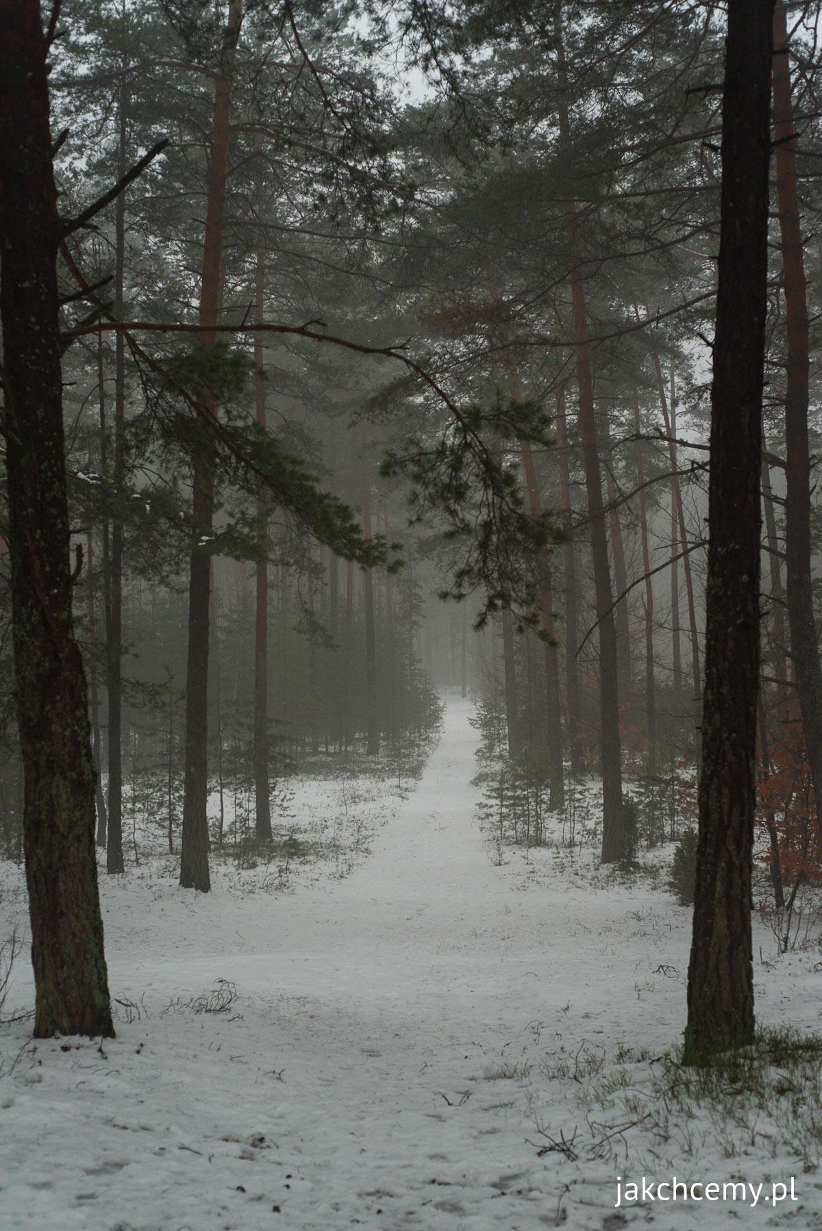 śnieg, ferie, las 13