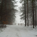 Ferie, śnieg, las