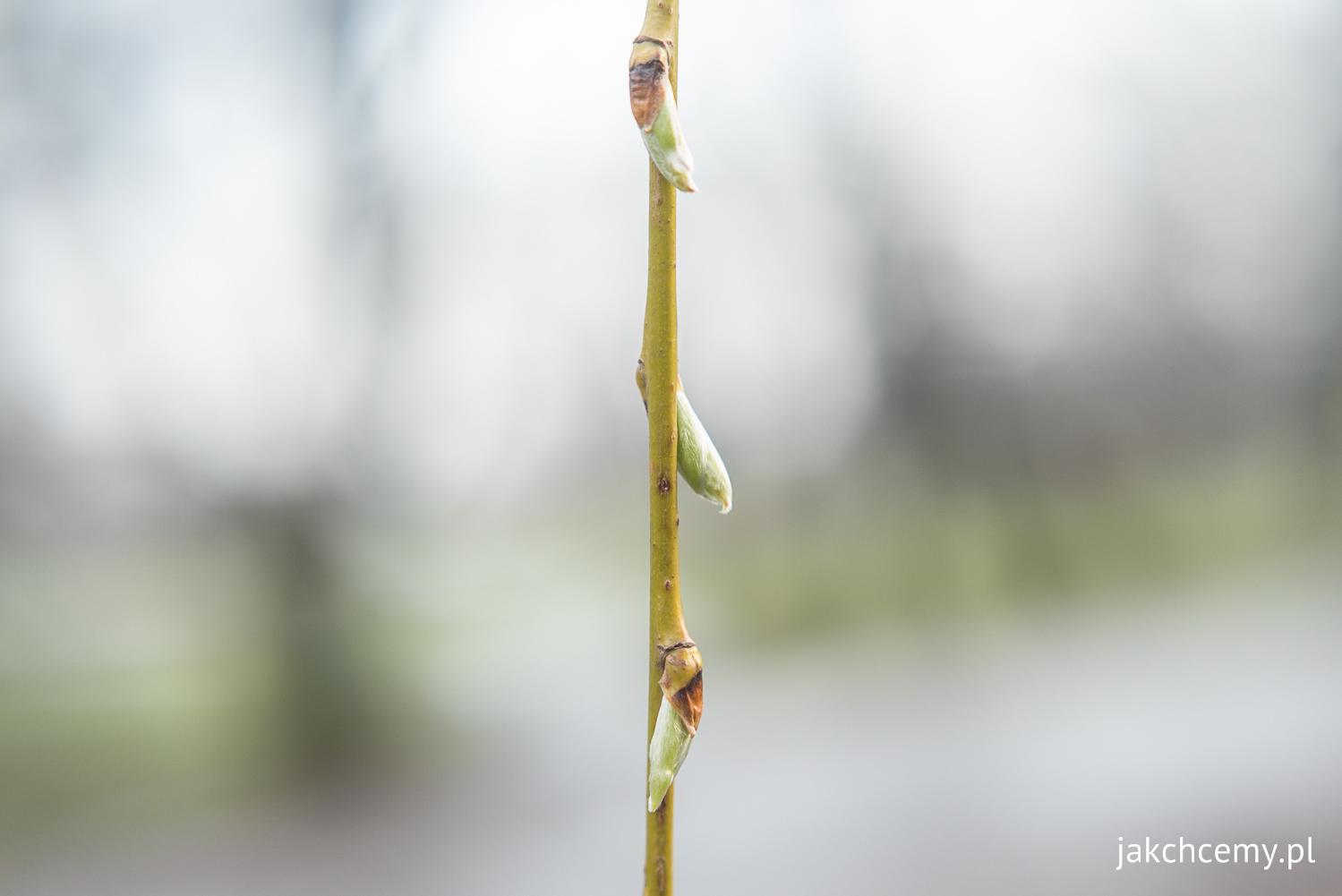 Koniec zimy jeszcze nie wiosna