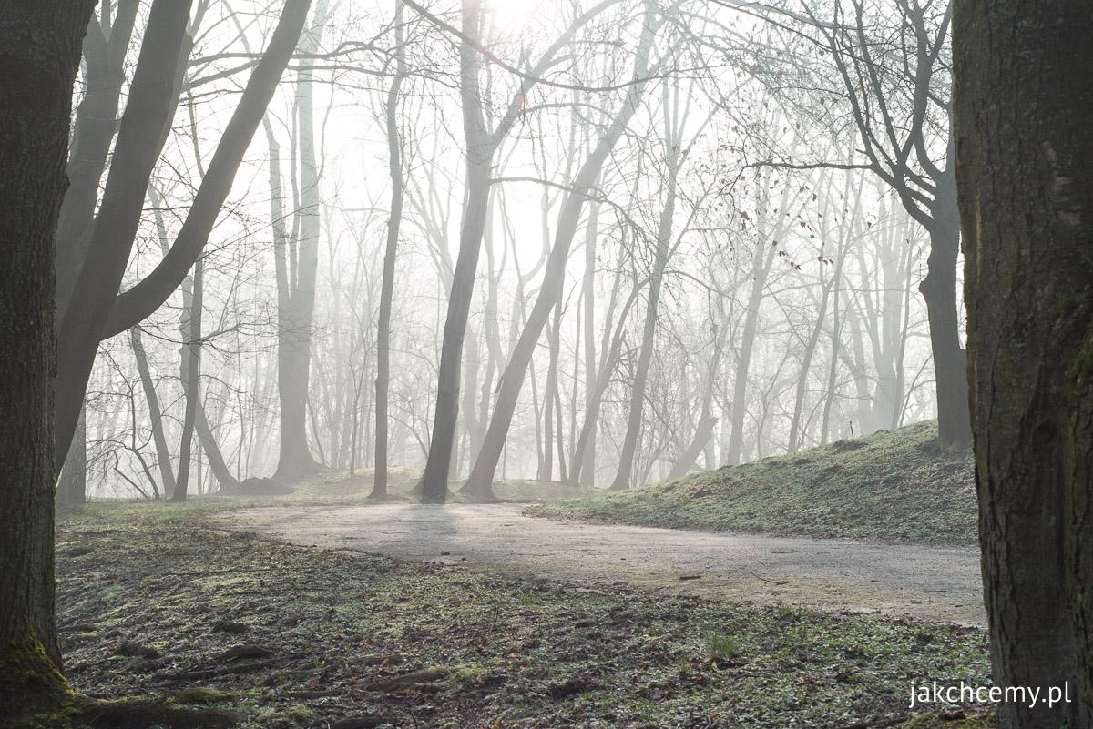 mglisto park decjusza szron prawie wiosna 7