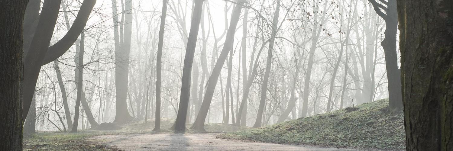 szron mglisto park decjusza wiosna prawie