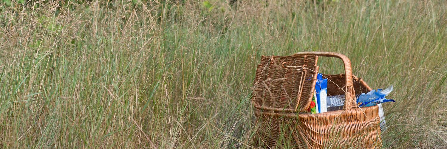 piknik rapy dylańskie las i staw