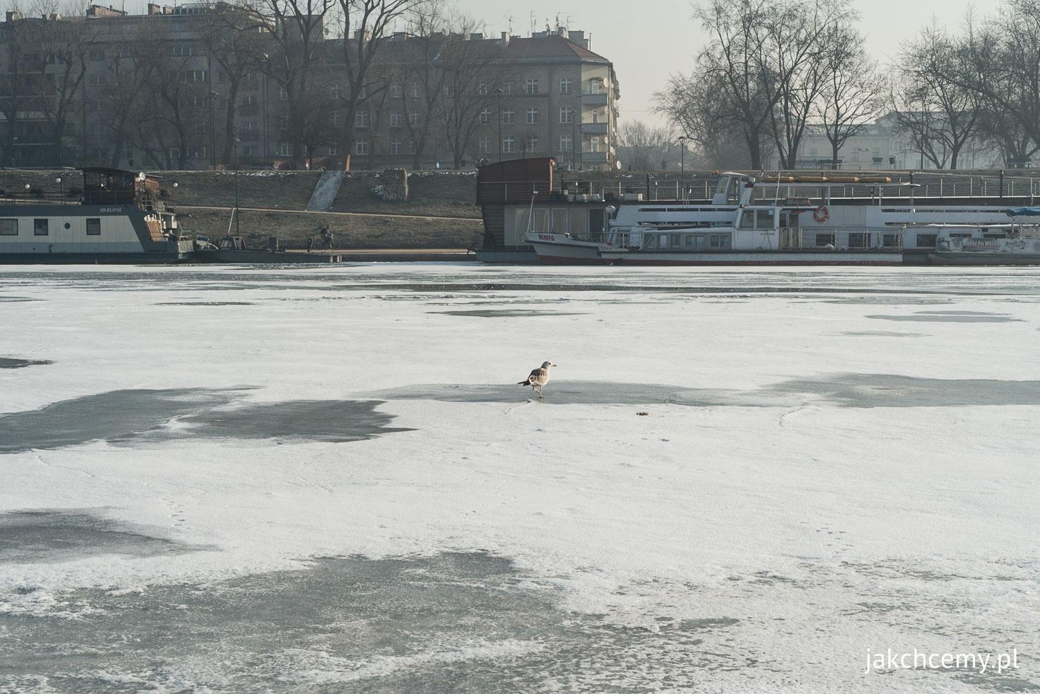 Wisła z lodem